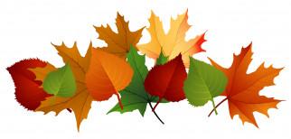 осень, листья, фон