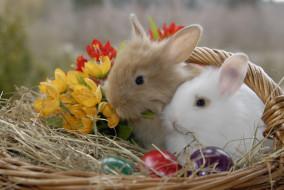 обои для рабочего стола 2896x1944 животные, кролики,  зайцы, цветы, крашенки, солома