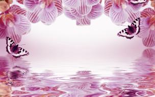 разное, компьютерный дизайн, фон, орхидеи, бабочки, отражение, рамка, цветы