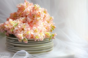 цветы, фон, посуда