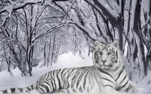 разное, компьютерный дизайн, зима, лес, снег, тигр, белый