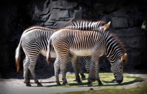 разное, компьютерный дизайн, зебра, рисунок, дизайн, животное