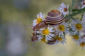 животные, улитки, цветы, макро, отражение, улитка