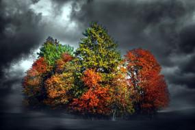 осень, мрак, тучи, деревья