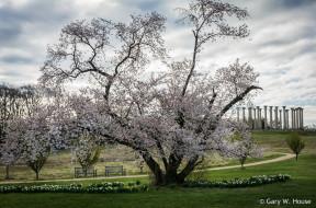 обои для рабочего стола 2048x1355 природа, деревья, весна