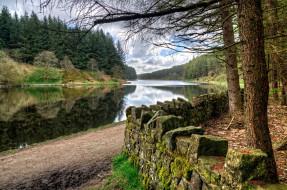 лес, река