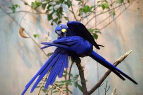 забавная, птица, окрас, перья