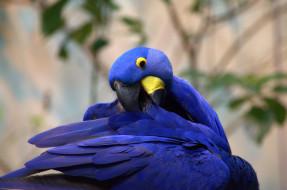 птица, окрас, перья, забавная