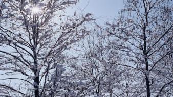 деревья, снег, небо, зима
