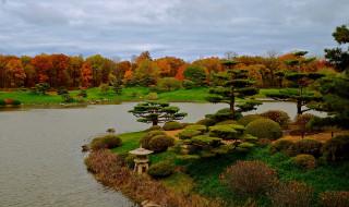 деревья, водоем