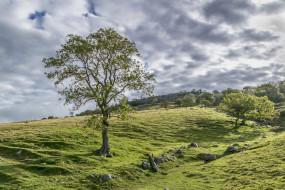 облака, трава, дерево