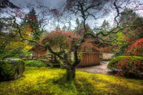 дом, кустарники, деревья, камни