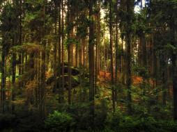 камни, деревья