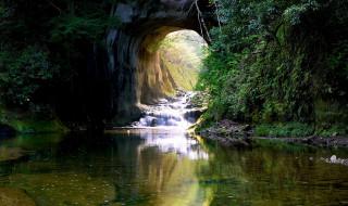 пещера, растения, водоем