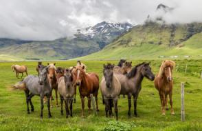 животные, лошади, табун, трава, горы, облака