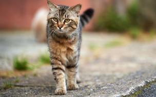 животные, коты, дорога