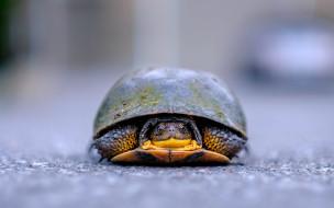 животные, Черепахи, профиль