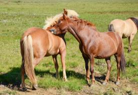 животные, лошади, животное, handsome, horse, animal, красавцы