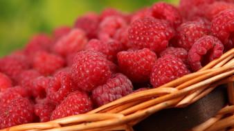 еда, малина, ягоды, корзинка, макро