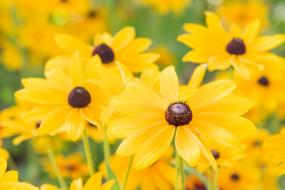 макро, лепестки, цветы, желтый
