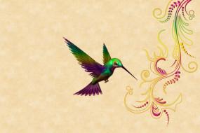 векторная графика, животные , animals, колибри