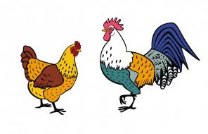векторная графика, животные , animals, петух, курица