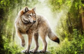 компьютерный дизайн, лес, волк