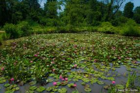 природа, парк, озеро, цветы