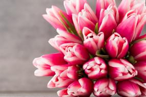цветы, тюльпаны, розовый, цвет