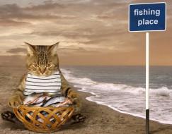 юмор и приколы, кот, улов, рыба
