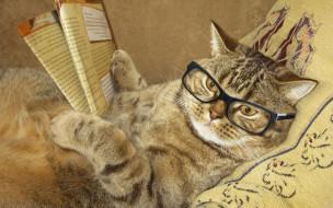 умный, лежит, креатив, очки, читает, кот, юмор, подушка, журнал