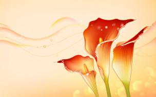рисованное, цветы, открытка, лепестки, каллы, волны, линии, стебель