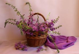 корзина, колокольчики, лето, натюрморт, цветы полевые