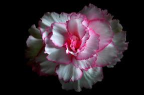 лепестки, цветок, фон, краски