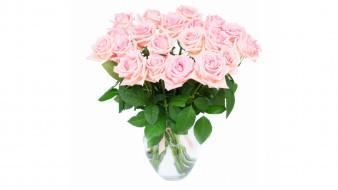 обои для рабочего стола 1920x1080 цветы, розы, белый, фон, розовый, цвет