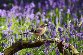 обои для рабочего стола 2048x1367 животные, птицы, птица, перья, окрас