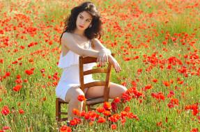 стул, поле, цветы, маки, шатенка, девушка
