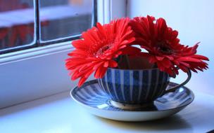 обои для рабочего стола 2560x1600 цветы, герберы, чашка, окно, подоконник, натюрморт, блюдце