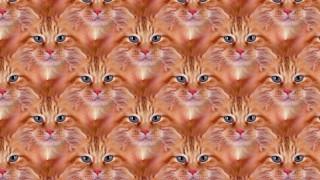 разное, компьютерный дизайн, фон, кошка, взгляд