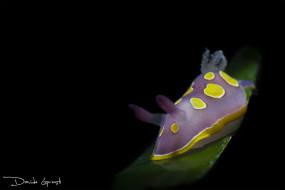 фиолетовый, темный фон, моллюск, подводный мир