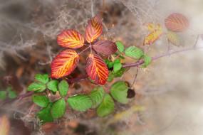 природа, листья, ветки, паутина, осень, фон, краски, макро