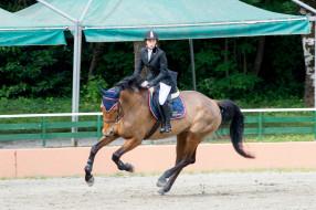 наездница, препятствия, конный спорт, лошадь, спорт