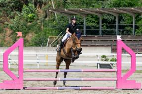 препятствия, конный спорт, наездница, лошадь, спорт