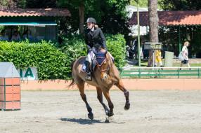 конный спорт, спорт, наездница, препятствия, лошадь