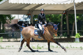 препятствия, наездница, лошадь, спорт, конный спорт