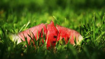 еда, арбуз, спелый, трава