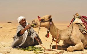 пустыня, бедуин, еда, верблюд