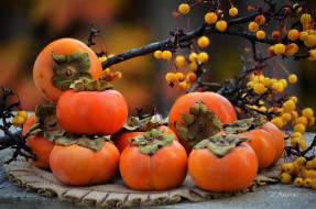 фрукты, ветки, ягоды, осень, салфетка, хурма