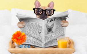 юмор и приколы, стакан, собака, юмор, сок, очки, газета, окуляры