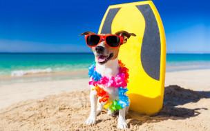 юмор, гирлянда, джек-рассел-терьер, пляж, собака